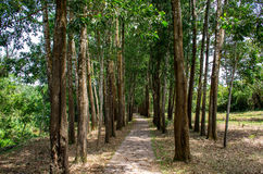 Treeline. Roadside trees in the ruins of My Son, Quang Nam, Vietnam Royalty Free Stock Photos