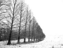 Treeline in the snow. Row of trees standing in the snow with a linear perspective in black and white Stock Photos