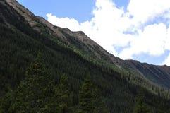 Treeline su un fianco di una montagna fotografie stock libere da diritti