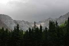 Treeline su un fianco di una montagna immagine stock libera da diritti