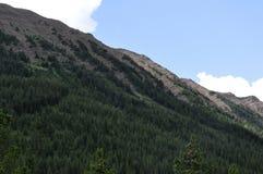Treeline su un fianco di una montagna immagini stock
