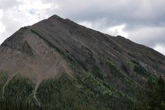Treeline su un fianco di una montagna fotografia stock
