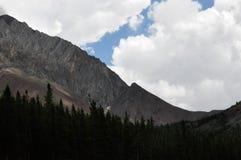 Treeline su un fianco di una montagna immagine stock
