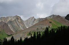 Treeline su un fianco di una montagna immagini stock libere da diritti