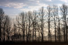 Treeline at sunrise in fog Stock Photography