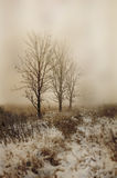 Treeline. Tree line on a foggy cold morning in the Midwest Stock Images