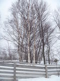 Treeline in Winter Fence and Birch Trees Nature Photograph Outdoor. Snow and fence tree line Michigan by Lake Superior in winter with fenceline nature photograph Royalty Free Stock Photo