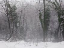 Treeline zimy śnieżna mgła zdjęcie stock