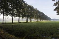 Treelined autumn landscape Stock Photography