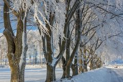 Treelined Buchenbäume Lizenzfreie Stockfotos