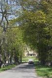 Treelined country road Stock Photo