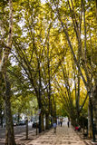 Treelined street in Lisbon Royalty Free Stock Photo