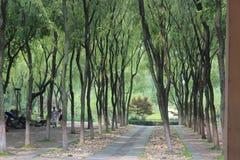 Treelines Royaltyfri Bild
