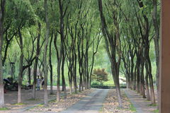 Treelines Imagem de Stock Royalty Free