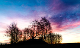 Treelonging. A wide angle shot of sunset trees on a field Royalty Free Stock Image