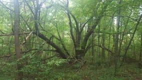 Treely träd Royaltyfri Foto