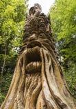 Treeman på Knaresborough, Yorkshire, England Royaltyfri Bild