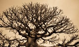 Treemodell Arkivfoton