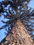 Treen Royaltyfri Fotografi