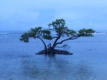 Treen bevattnar in Royaltyfria Bilder