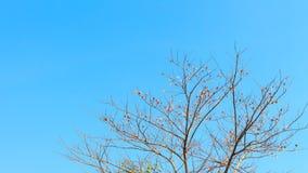 Treen förgrena sig på skyen Arkivfoton