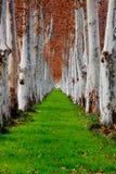 Treen fodrar Arkivfoto