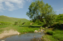 Treen i floden Royaltyfria Bilder