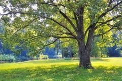 Treen i parken arkivfoto
