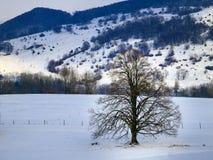 Treen i vinter landskap Royaltyfri Fotografi