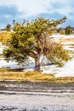 Treen i vinter landskap Arkivfoton