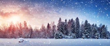 Treen i vinter landskap Royaltyfria Bilder