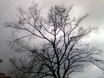 Treen without lämnar Arkivfoto