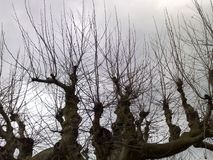 Treen without lämnar Fotografering för Bildbyråer