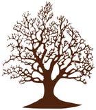 Treen without lämnar Arkivbild