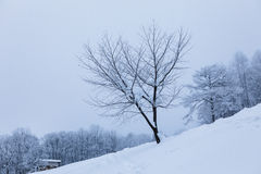 Treen without lämnar Royaltyfri Fotografi