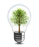 Treen in lampadina Fotografie Stock