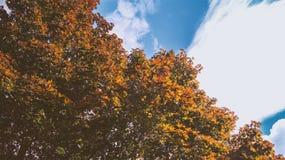 Treen med guling lämnar Arkivfoton