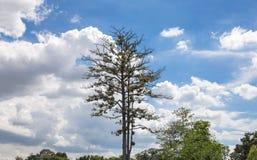 Treen na krajobrazowym widoku Obraz Stock