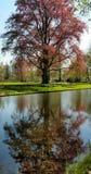 Treen och bevattnar Royaltyfri Foto