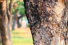 Treen parkerar in Fotografering för Bildbyråer