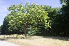 Treen parkerar in royaltyfria bilder