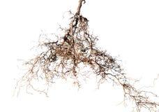 Treen rotar Fotografering för Bildbyråer