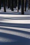 Treen skuggar på snow Royaltyfri Bild