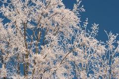 Treen som räknas med rimfrost. Royaltyfri Bild