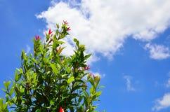 Treen under skyen Arkivbilder