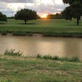 Treenighet på solnedgången royaltyfri foto