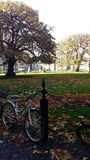 Treenighethögskola - Dublin Ireland - centralt område Arkivfoton