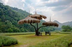 treeparaply Fotografering för Bildbyråer