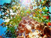 TreePortrait стоковая фотография rf