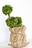 Treepot на белой предпосылке Стоковое Изображение